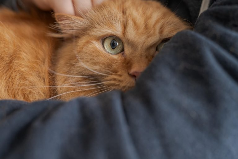Read more about the article The Kitty Who Taught Me About Being Present